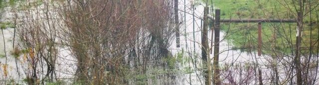 Image of pond and reeds, saplings and green grass on a drippy, rainy day